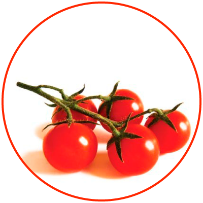 Tomato of Pachino IGP/PGI